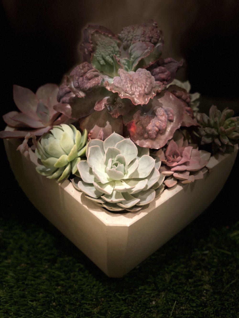 Succulents in square Concrete planter
