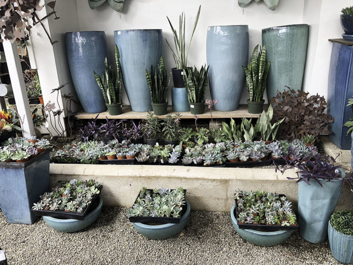 Blues and Succulents
